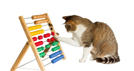 Photo pour Conceptual image of a clever cat mathematician sitting playing with a large colourful abacus moving it around with its paw as it performs calculations - image libre de droit