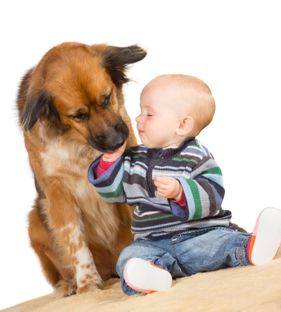 Faithful family dog gently licking the hand of a cute baby as they sit together on the floor with a white background
