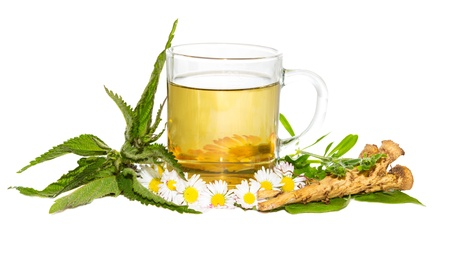 Foto für Fresh herbal infusion or tea for the springtime detoxifying cure , with Bellis prennis and Urticaceae - Lizenzfreies Bild