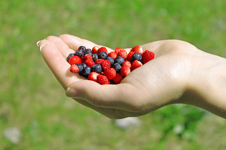 Female hand holding a handful of wild berries - strawberry and blueberry. Green grass background.