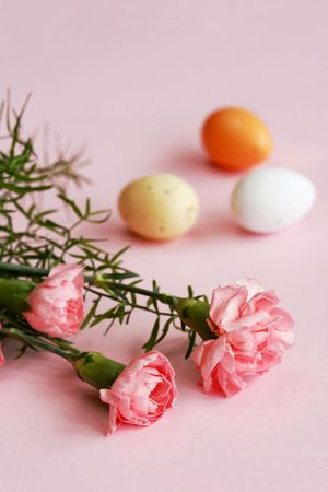 Easter eggs and carnation