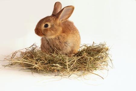 Bunny rabbit on the hay