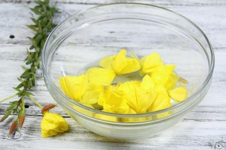 Making Bach flower remedies, Oenothera biennis, evening star, natural method of healing