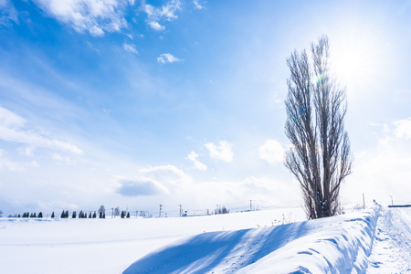 Photo pour Beautiful outdoor nature landscape with tree of ken and mary in biei area Hokkaido Japan - image libre de droit