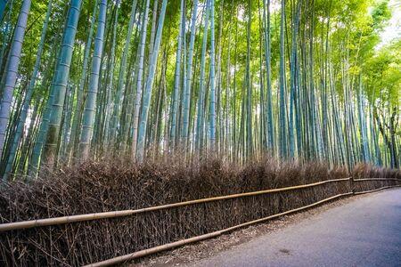 Photo pour Beautiful bamboo grove tree in arashiyama area Kyoto Japan - image libre de droit