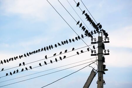 Many birds sit on wires on a background of the blue sky with clouds