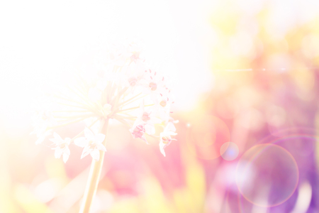 Colorful Flower background Out of focus with soft filter