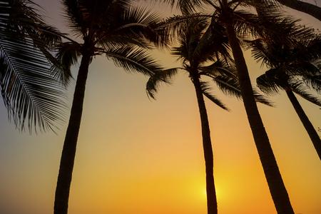 Photo pour Sunset at the beach view, outdoor day light - image libre de droit