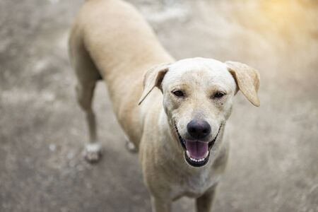 Photo pour Smiling dog waiting for her treat, happy dog standing outside the house waiting for the owner to come home - image libre de droit
