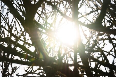 Sunlight reflected through tree branches silhouette. Sunny day abstract lens flare.