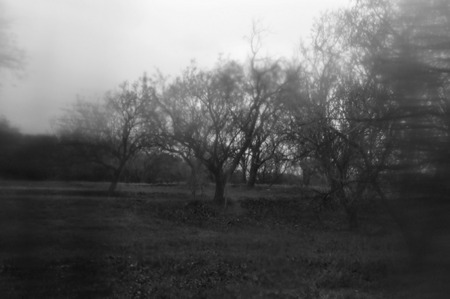 Hazy winter nature landscape trees in a forest abstract blur. Black and white.