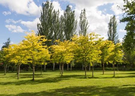 Public park with green and yellow shades in summer.