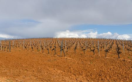 Vineyard plantation in row in spring, in slope, With the vines clean and pruned - Plantacion de Viñedos en hilera en Primavera , en cuesta, con las cepas cimpias y podadas ///viñedo, plantacion, cepas, terreno, primavera, cultivo, vides, hileras, Vitis