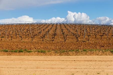Vineyard plantation in row in spring, in slope, and way in first term - Plantacion de Viñedos en hilera en Primavera , en cuesta, y camino en primer término///viñedo, plantacion, terreno, primavera, cultivo, vides, hileras, Vitis vinifera,  prieto picudo, espaldera ,emparrado, alineadas, cuesta, loma, camino, tierra, arcillosa, marron, campo, soleado, dia, nadie, despejado, nubes, cielo, azul, naturaleza, vino, leon, españa, cultivo, agricola, agricultura, industria