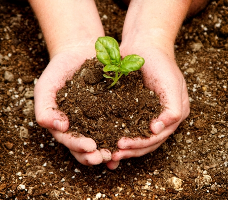 A child holding a seedling in dirt in their hands.