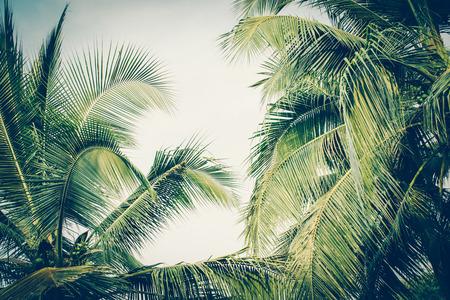 Photo pour Coconut palm tree foliage under sky. Vintage background. Retro toned poster. - image libre de droit