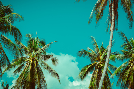 Foto de Coconut palm tree under sky. Vintage tropical background. Travel card. Retro toned poster. - Imagen libre de derechos
