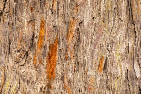 Foto de Close focus on texture of old hardwood tree, rough bark damage and cracking out from trunk. - Imagen libre de derechos