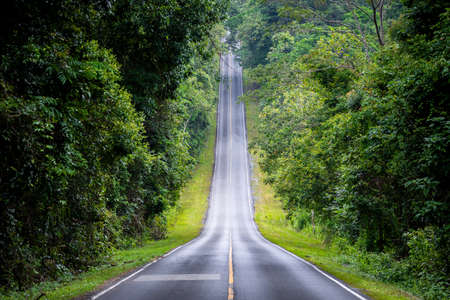 Photo for Straight road in countryside on hill slope surrounding by green trees inside tropical rainforest area. - Royalty Free Image