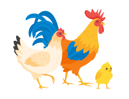 Illustration pour Chicken family: hen, rooster and chick. Vector illustration isolated on white background. - image libre de droit