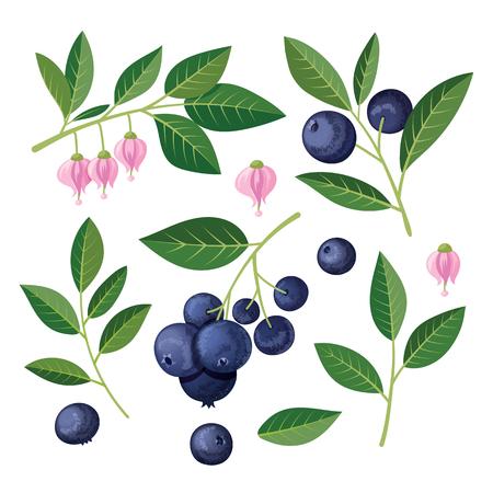 Illustration pour Blueberries Set of elements.  illustration on white background. - image libre de droit