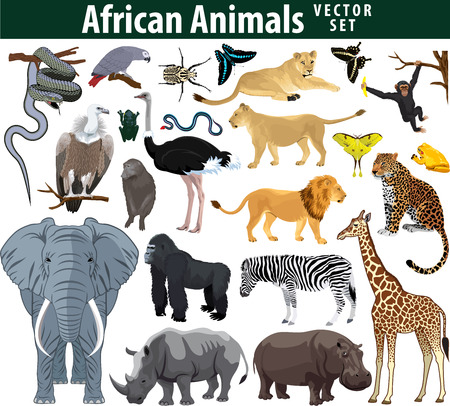 Photo for Wild african animals set with zebra ostrich lion rhinoceros hippo snake leopard vulture parrot gorilla butterflies giraffe frog isolated illustration - Royalty Free Image
