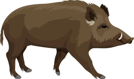 Illustration for vector wild hog boar mascot - Royalty Free Image