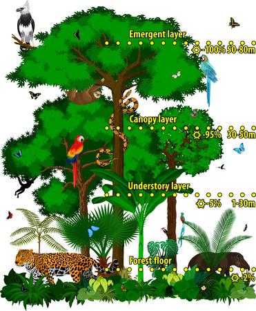 Illustration pour Rainforest jungle layers vector illustration.  Green Tropical Forest jungle with different animals Vector. - image libre de droit