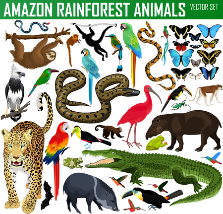Illustration for big set of vector amazon rainforest jungle animals - Royalty Free Image