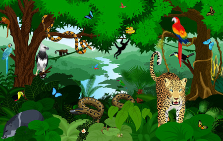 Illustration pour Rainforest with animals vector illustration. Vector Green Tropical Forest jungle with parrots, jaguar, boa, peccary, harpy, monkey, frog, toucan, anaconda and butterflies. - image libre de droit