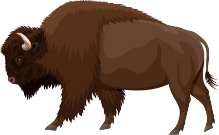 Ilustración de vector brown zubr buffalo bison - Imagen libre de derechos