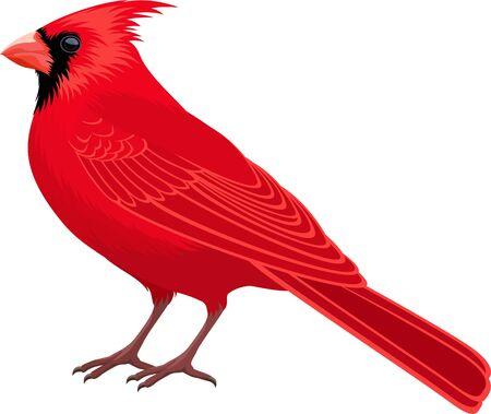 Illustration pour vector Red Male Northern Cardinal - state bird - image libre de droit