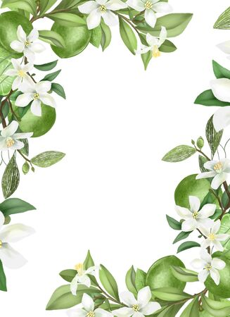 Photo pour Card template, frame of hand drawn blooming lime tree branches, flowers and limes on white - image libre de droit