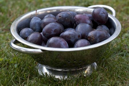 Basket with plums - blue fruit