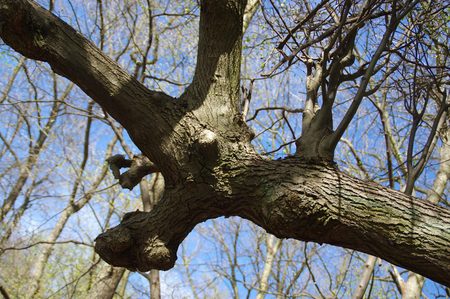 Old distorted branch. Unusual tree in national park.