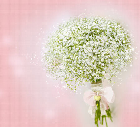 A Gypsophila  Baby s-breath flowers  Bouquet on Pink Background