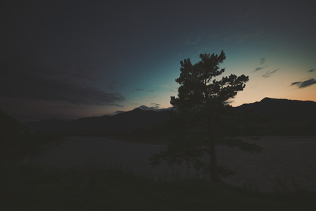 Scenery wide angle view of cedar tree silhouette near Katun mountain river on late sunset with mountains and hills in background and dark dramatic teal and orange summer sky, Altai, Russia