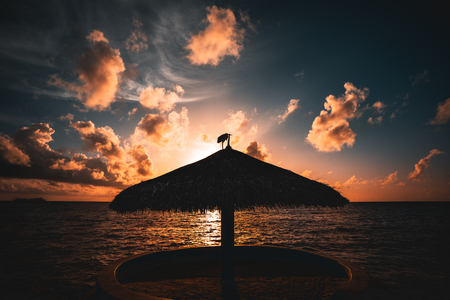 Wide angle shooting of stunning beautiful sunset on Indian ocean near Maldives resort with silhouette of beach sunshade in centre and heron standing on it, beautiful cloudscape and gradient on sky