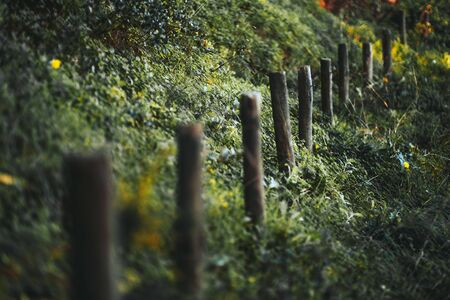 A close-up view with a shallow depth of field of a row of wooden poles as a part of an old fence or just denoting the border between the two areas surrounded by greenery on the hill; selective focus