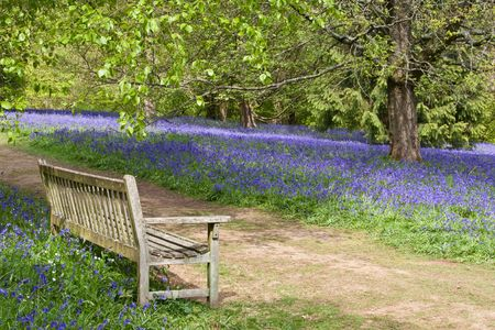 A bench on a country path with a view of tranguility: spring bluebells & woodland