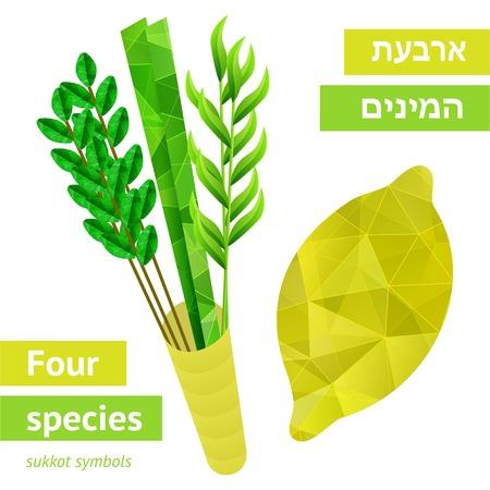 Four species - palm, willow, myrtle , etrog - symbols of Jewish holiday Sukkot  Vector illustration