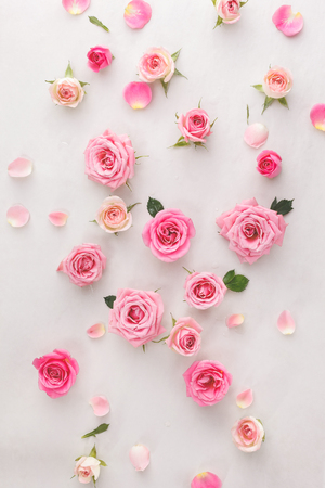 Foto de Roses background.  Roses and petals scattered on white background, overhead view - Imagen libre de derechos