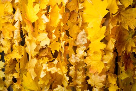 curtain of natural autumn leaves, texture, close up