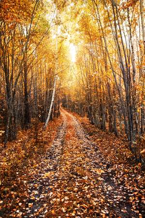 Autumn sunny landscape with a forest road. Karelia. Russia