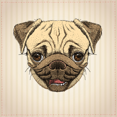 Illustration for Pug dog graphic portrait, hand drawn vector illustration with cute pug dog - Royalty Free Image