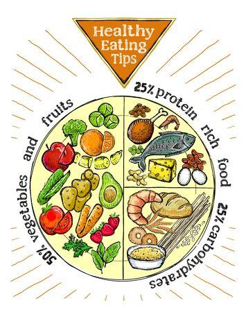 Vektor für Healthy eating tips plate, proper nutrition proportions, hand drawn vector illustration - Lizenzfreies Bild
