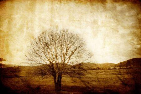 Photo pour  vintage old picture with alone tree 2 - image libre de droit