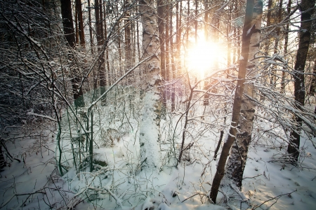 Winter deciduous forest with sunbeams over the trees