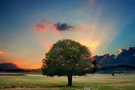 alone tree in sunset- HDR dramatic nature landscape