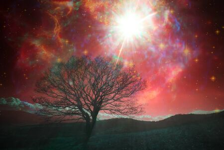 Foto de red alien landscape with alone tree over the night sky with many stars - Imagen libre de derechos